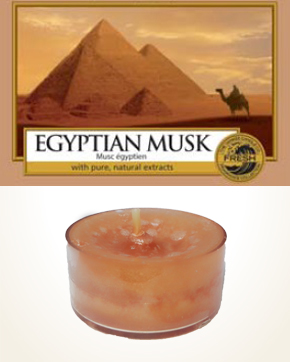 Yankee Candle Egyptian Musk Tealight Candle sample 1 pcs